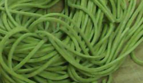 Pasta Fresca al Verde